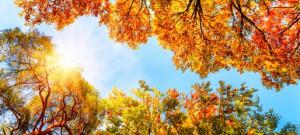 Baumkronen, blauer Himmel und Sonne im Herbst